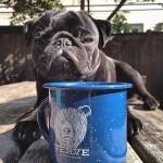 VERVE COFFEE ROASTERS新宿の混雑する営業時間は?待ち時間はどの位?